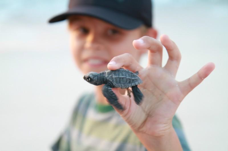 Releasing Baby Turtles in Punta Mita, Mexico