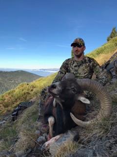 Mouflon by Marty Oros