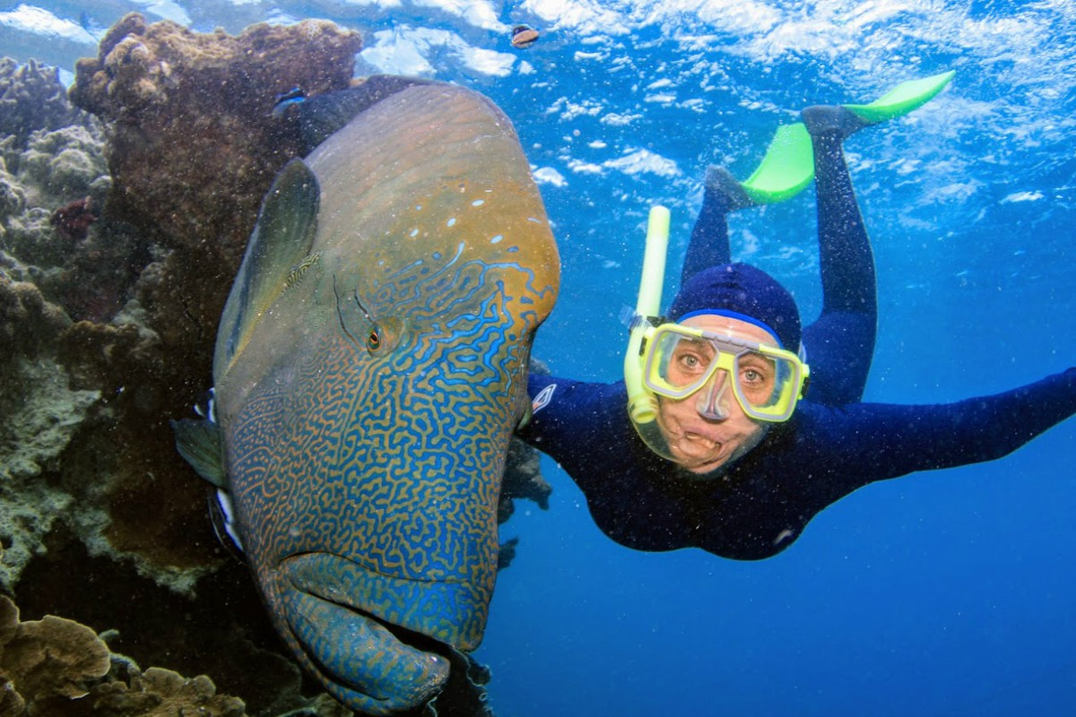 A beautiful Maori Wrasse - photo credit Cruise Whitsundays