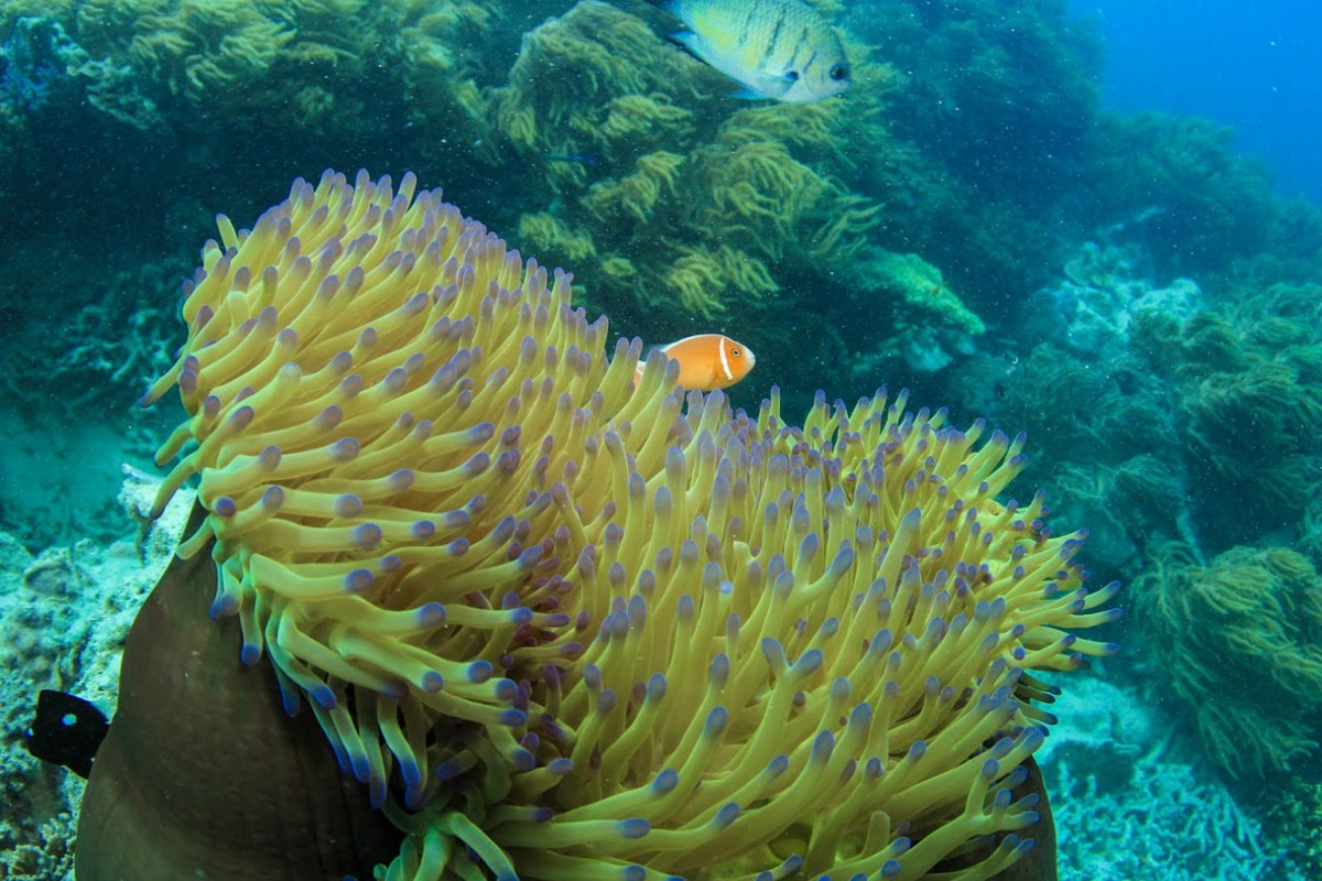 Finding Nemo - Photo Credit: Cruise Whitsundays