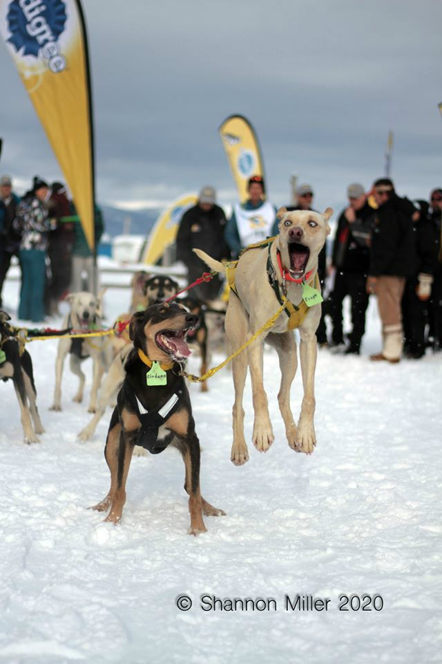 One excited dog! Photo by Shannon Miller